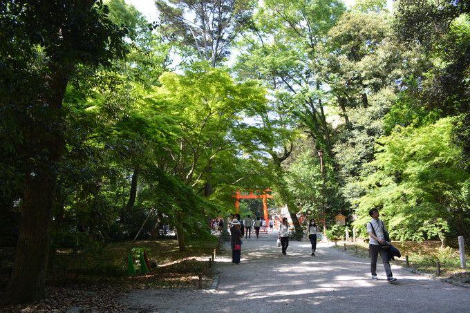新緑美しい糺の森