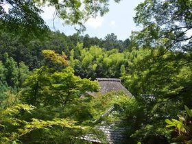 京都嵯峨野で一押し!初夏の新緑が美しい5つの寺院|京都府|トラベルjp<たびねす>
