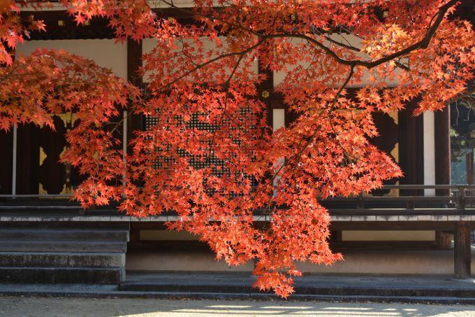 五重塔を囲む錦秋の色彩を見逃すな!世界遺産「仁和寺」
