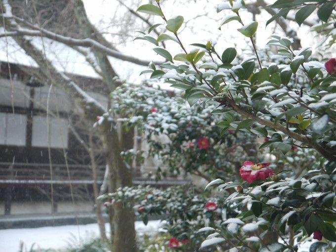 雪の日でも花の咲く天龍寺百花苑