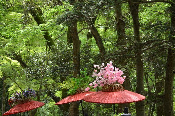 風流傘も、新緑も色鮮やかだ