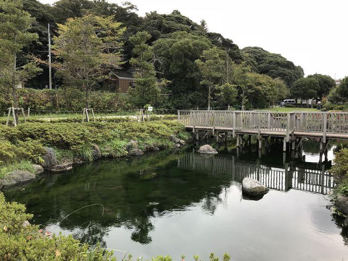 神秘の泉が流れ込む公園「泉が森公園」