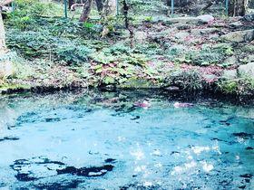 エメラルドブルーに輝く神秘のパワースポット!茨城「泉神社」