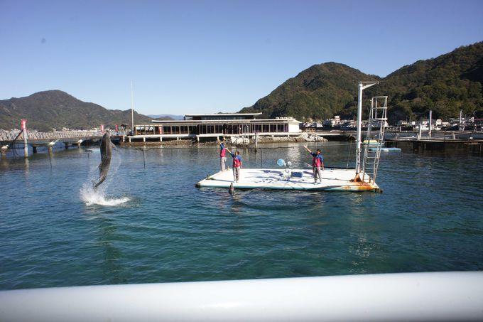自然の海で育ったイルカのショー