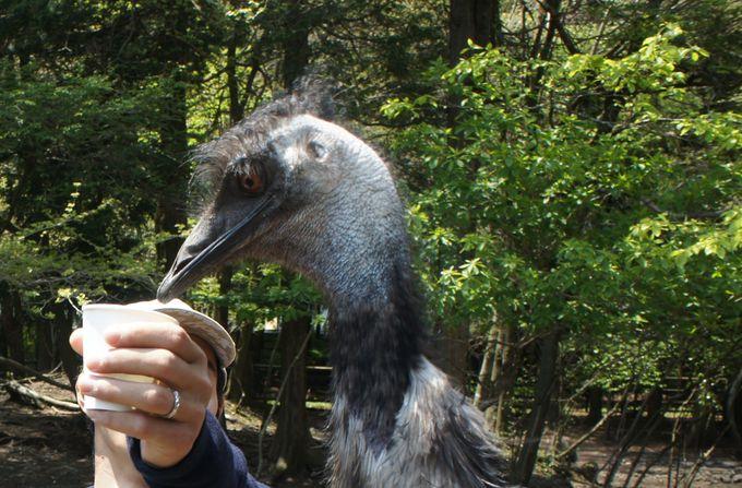 鳥たちの餌やり体験