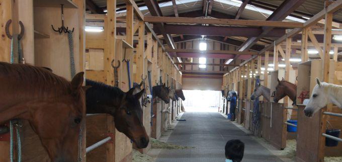 ずらっと並ぶ馬小屋