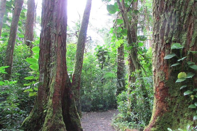 都会の喧騒を逃れた森で過ごす「癒しのひととき」