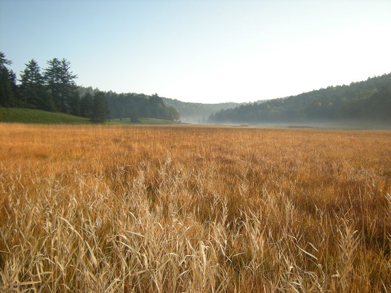 秋の尾瀬。「草紅葉」と呼ばれる紅葉があります