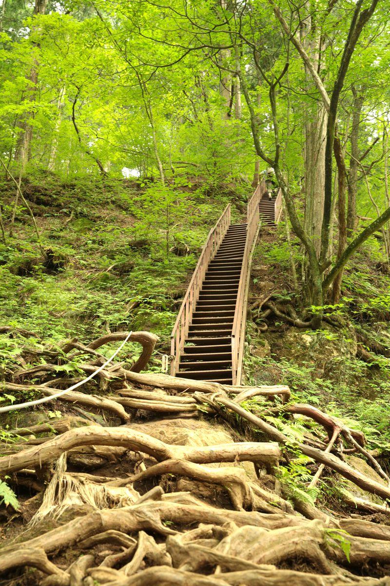 大自然!東京のパワースポット・御岳山で森林浴に癒されよう!