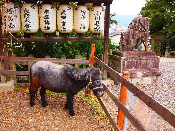 超可愛い大石神社の「花子ちゃん」