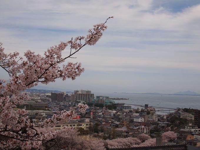 琵琶湖を眼下に桜をめでる
