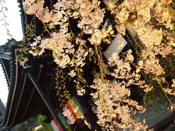 紫雲山頂法寺