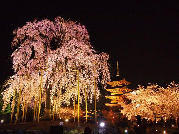 京都通がおすすめする桜の名所20選