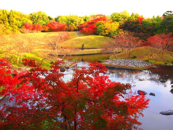 京都駅から近い紅葉の穴場!ライトアップもある「朱雀の庭」