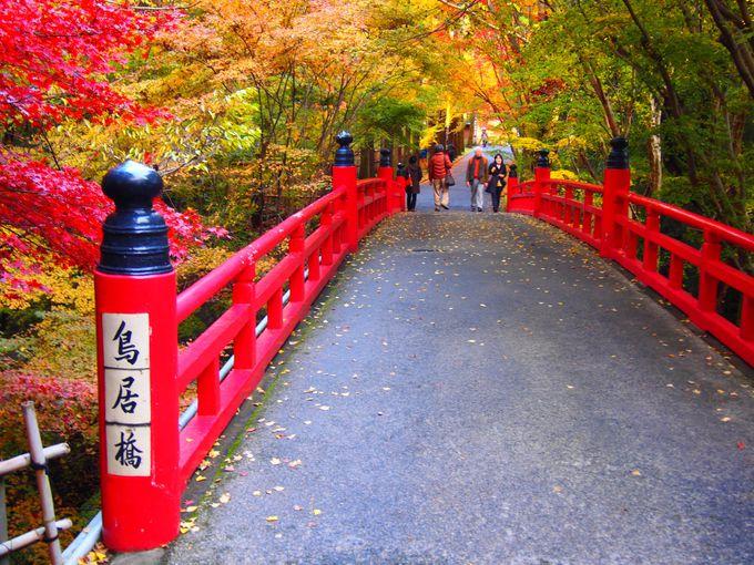 京都「東福寺」周辺のおススメ紅葉スポット!「泉涌寺」「今熊野観音寺」