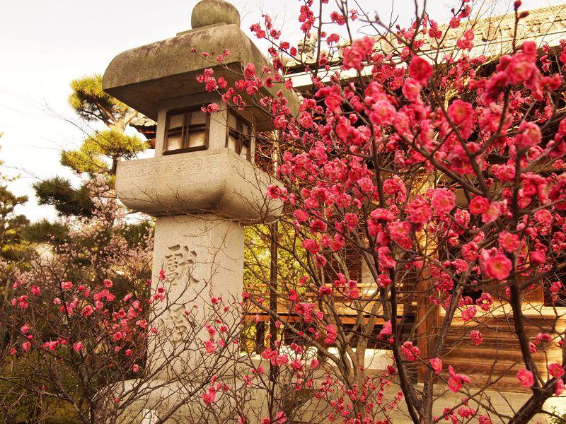梅も美しいお釈迦様と光源氏のお寺!京都・嵯峨釈迦堂「清凉寺」