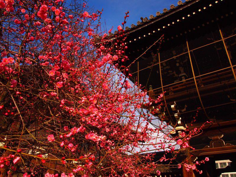 京都駅から徒歩圏内!春まで待てない「梅」の名所オススメ3選