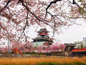 春の桜も美しい織田信長の出世城!愛知「清洲城」とその歴史|愛知県|トラベルjp<たびねす>