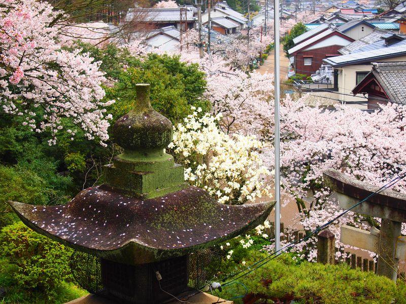 春の桜も美しい伝説の名水の里!滋賀県・醒井宿