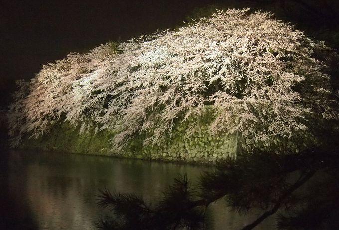 「いろは松」越しに見る桜