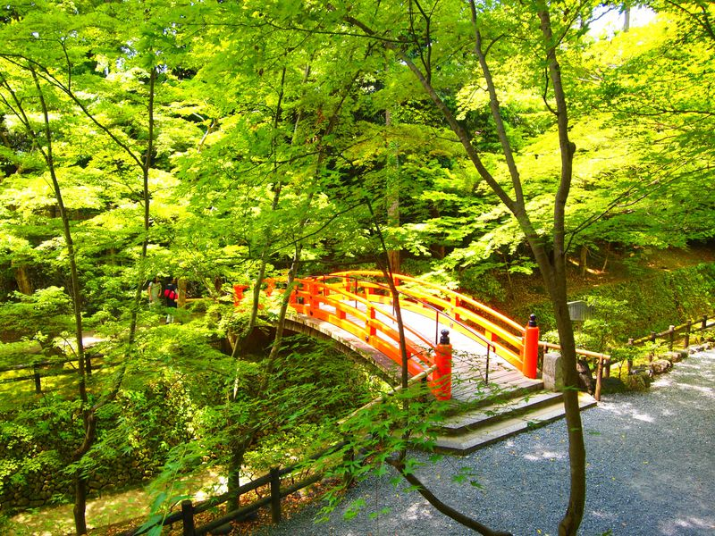 新緑が美しい!京都・北野天満宮「史跡御土居の青もみじ公開」