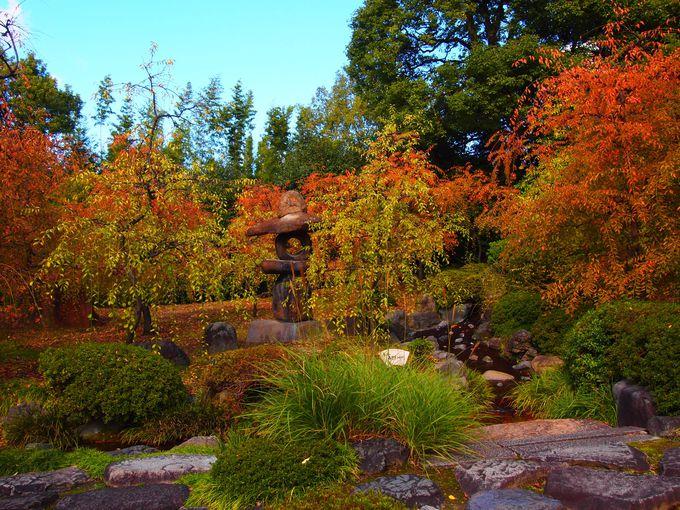 素晴らしい庭園が無料に