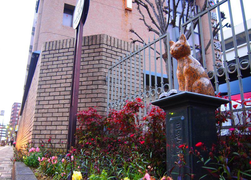 熊本の猫スポット!夏目漱石ゆかり「わが輩通り」の猫オブジェ