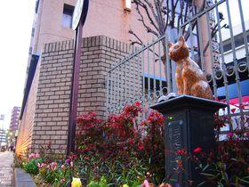 熊本の猫スポット!夏目漱石ゆかり「わが輩通り」の猫オブジェ|熊本県|トラベルjp<たびねす>