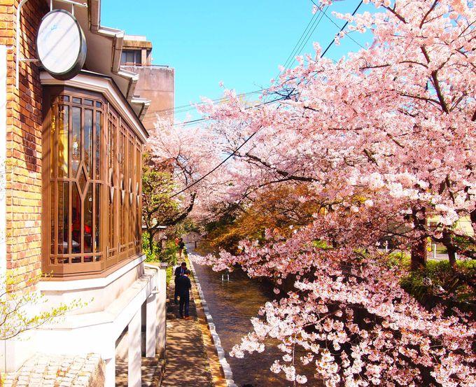 まずはお店の目の前の桜を堪能!