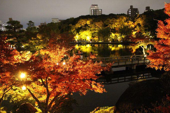 秋のライトアップ!