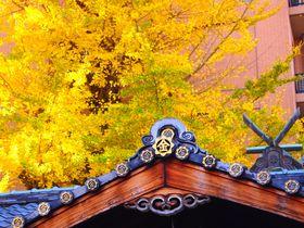 金運アップ!京都「御金神社」はイチョウが黄金色に色づく頃がスゴイ!
