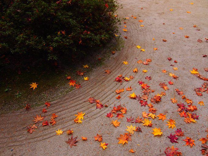 秋の散りモミジが素敵!