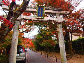モミジのトンネルをくぐって良縁祈願!京都洛北「鷺森神社」