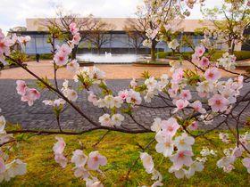 桜とともに眺める庭園も素晴らしい!春の「京都国立博物館」