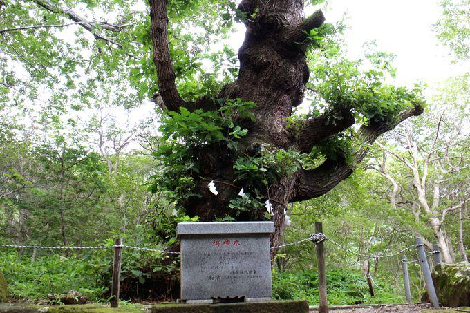 那須与一ゆかりの神社!那須のパワースポット「温泉神社」