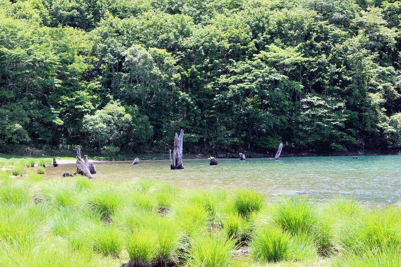 時が経つのも忘れそう!群馬・湧き水溢れる神秘的な「丸沼」に感動