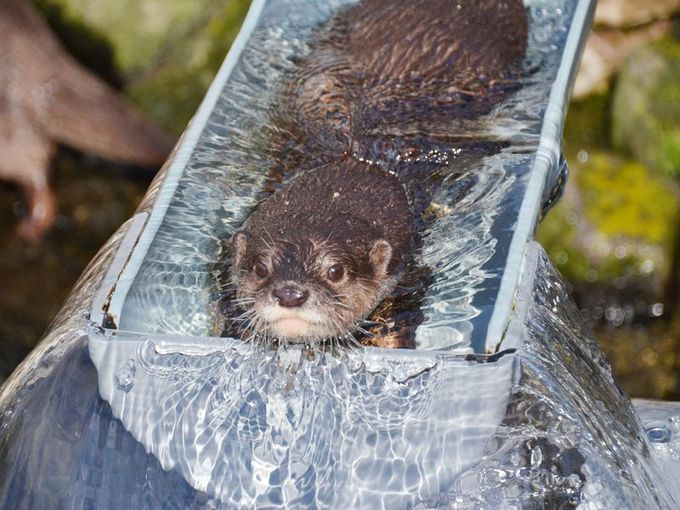 名物の「流しカワウソ」が有名になった「市川市動植物園」