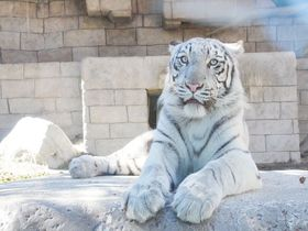 動物&遊園地の最強コンビ!東武動物公園(埼玉県)で丸一日楽しもう|埼玉県|トラベルjp<たびねす>