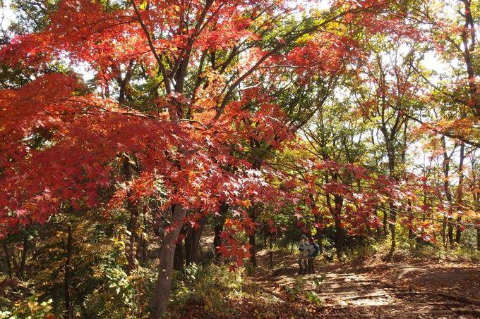 静かな奥高尾を歩こう「陣馬山〜景信山」プチ縦走のすすめ