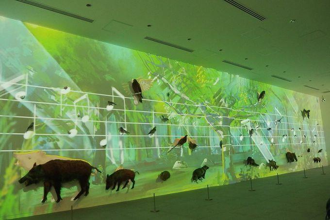 映像と音と動物のコラボレーション!「ネイチャーウォール」