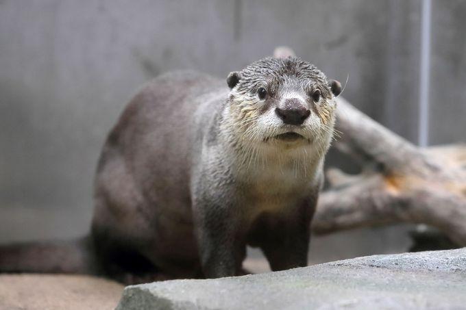 体験型プログラムが充実!「仙台うみの杜水族館」で海のいきものに急接近!