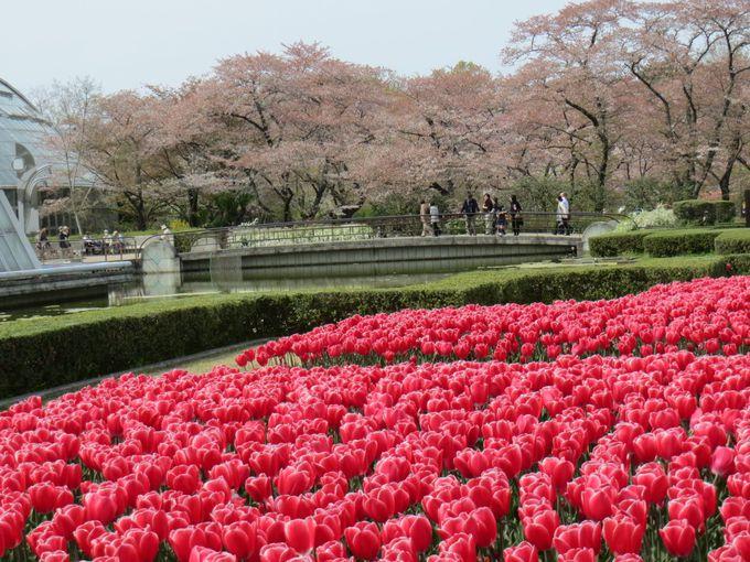 14.京都府立植物園