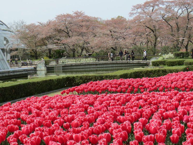 家族で花を愛でるならココ!子供も楽しい「京都府立植物園」