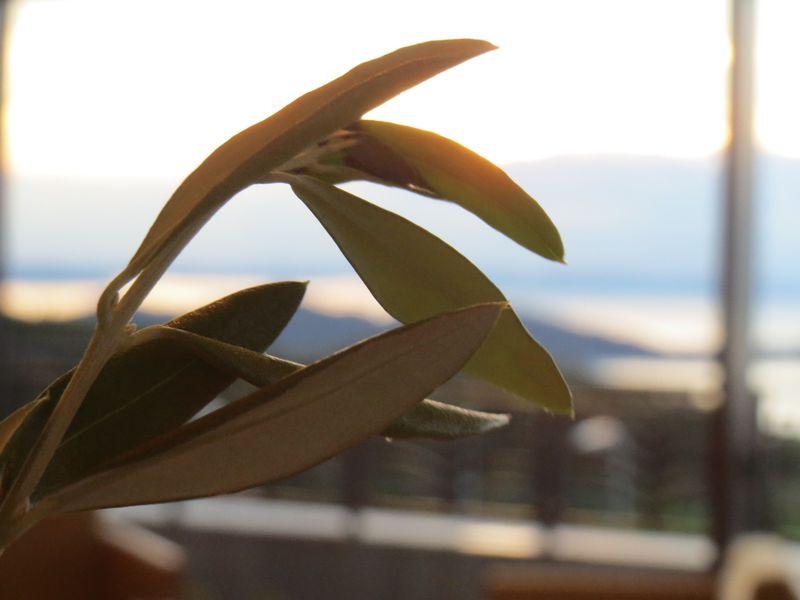 オリーブ香る「小豆島」の人気スポットでやっておくべきこと