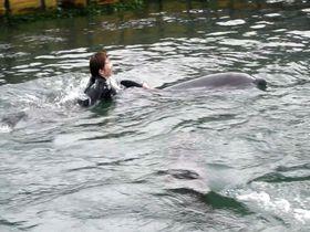 瀬戸内海・塩飽諸島「本島イルカ村」でイルカと泳いで幸せ探し!|香川県|トラベルjp<たびねす>