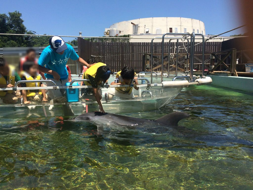 イルカとふれあう貴重な時間