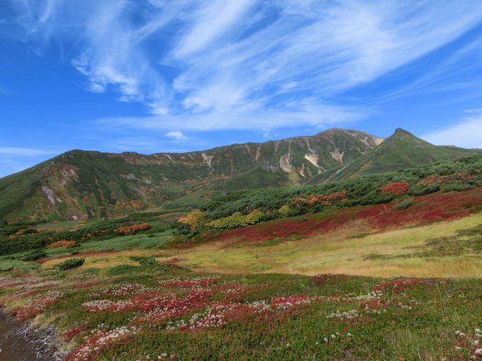 高山植物の楽園 裾合平