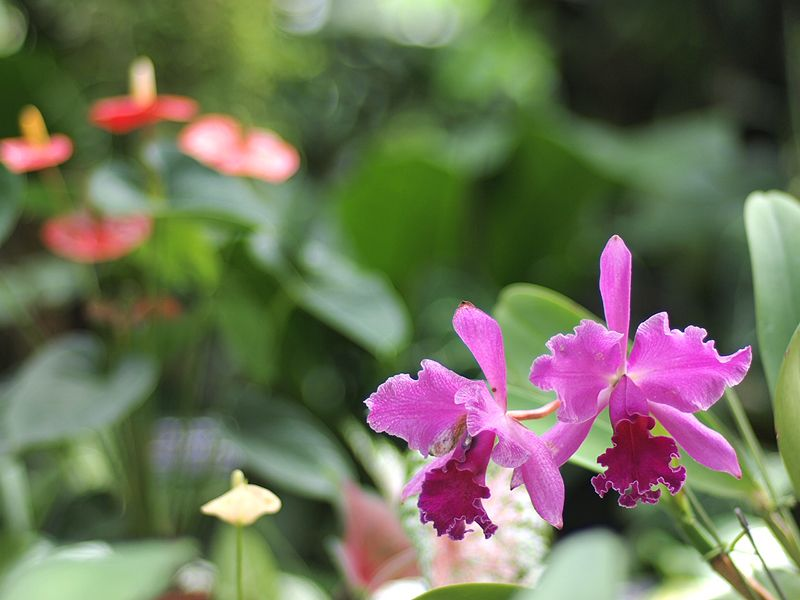 冬は大温室で貴重な花を鑑賞しよう!
