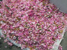 イラン・世界遺産フィーン庭園の町「カーシャーン」を楽しもう!