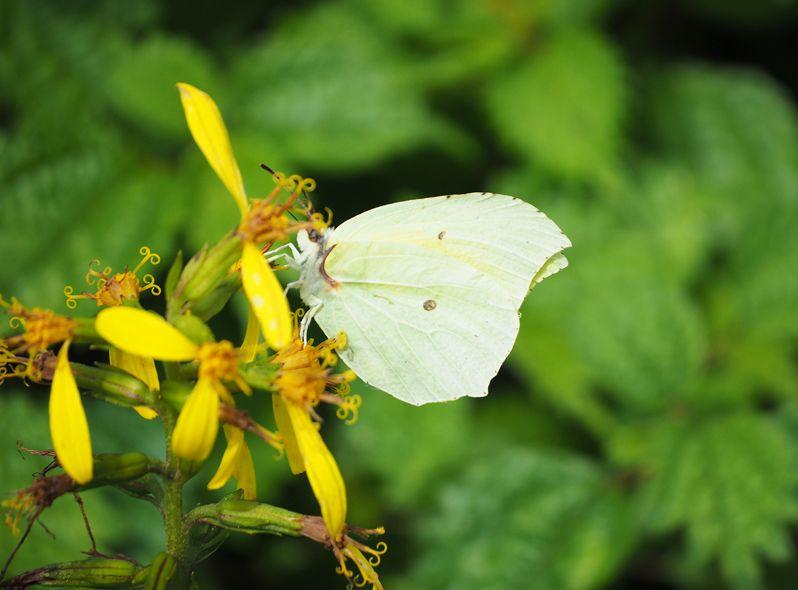 珍しい蝶や野鳥にも会える!